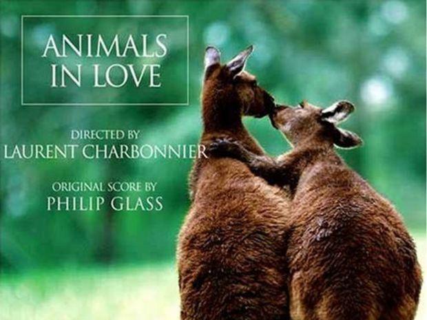 Zamilované zvieratá