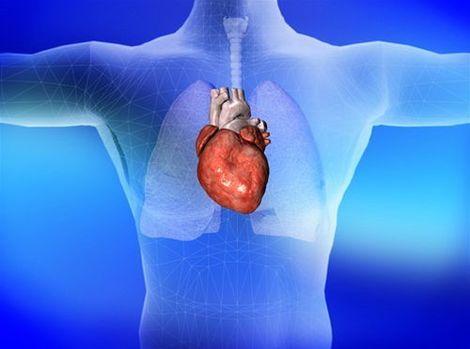 17056-hrudnik-srdce-clanok.jpg