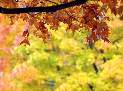 Prichádza jesenná rovnodennosť aj babie leto