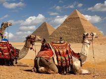 Egypt, ťava, pyramídy, púšť, ťavy