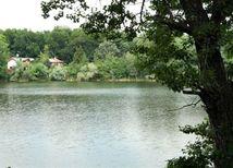 draždiak, petržalka, voda, jazero, stromy