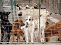 psy, útulok, búdy, týranie