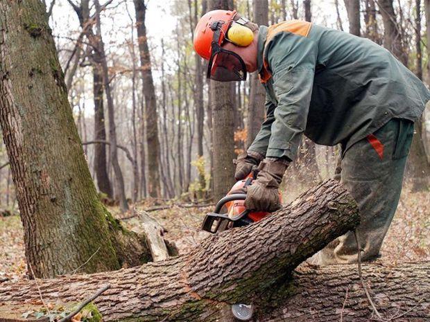 les, drevo, strom, stromy, urbár, urbariát