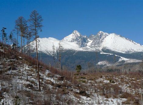 124207-vysoke-tatry-drevo-les-kalamita-vichrica-clanok
