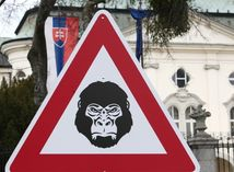 Gorila, protest
