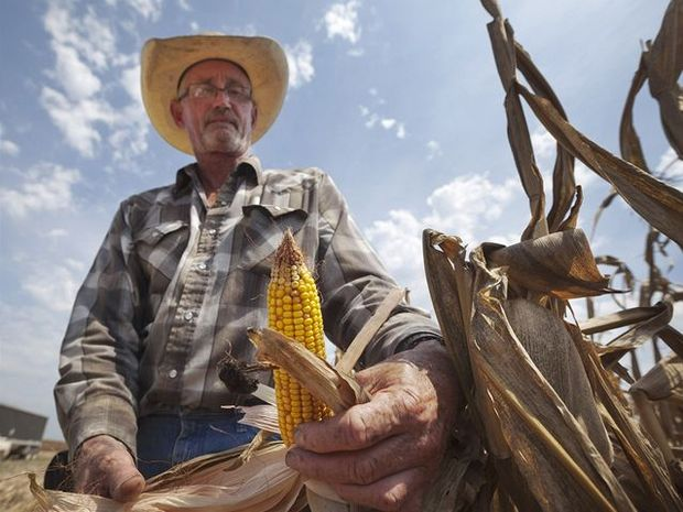 kukurica, potravinová kríza