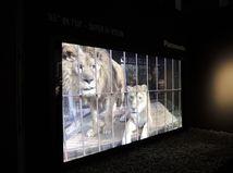 Panasonic, IFA 2012, LCD, LED, televízor, obraz, plazma