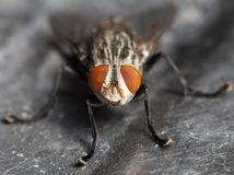 hmyz, mucha,