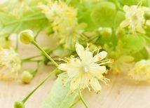 Pri nachladnutí aj angíne pomáha čaj z lipových kvetov