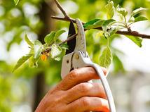 Strom, jabloň, strihanie, záhrada, bývanie