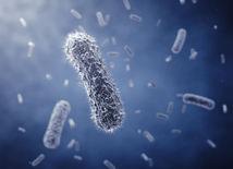 mikróby, baktérie, vírus, medicína