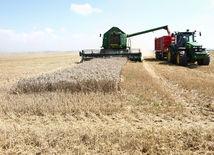 poľnohospodárstvo, žatva, farma, farmár, kombajn, vidiek