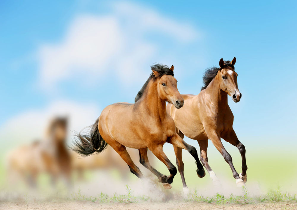Kone - ilustračné foto.