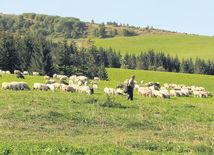ovce, salaš, bača, vidiek, dedina, región, lúka