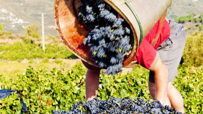 17f1fc9681 Slávne rakúske víno chcú premenovať. Má meno po nacistovi - Cestovný ruch -  Cestovanie - Pravda.sk