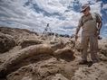 USA, slon, praslon, Albuquerque, fosília, stegomastodont