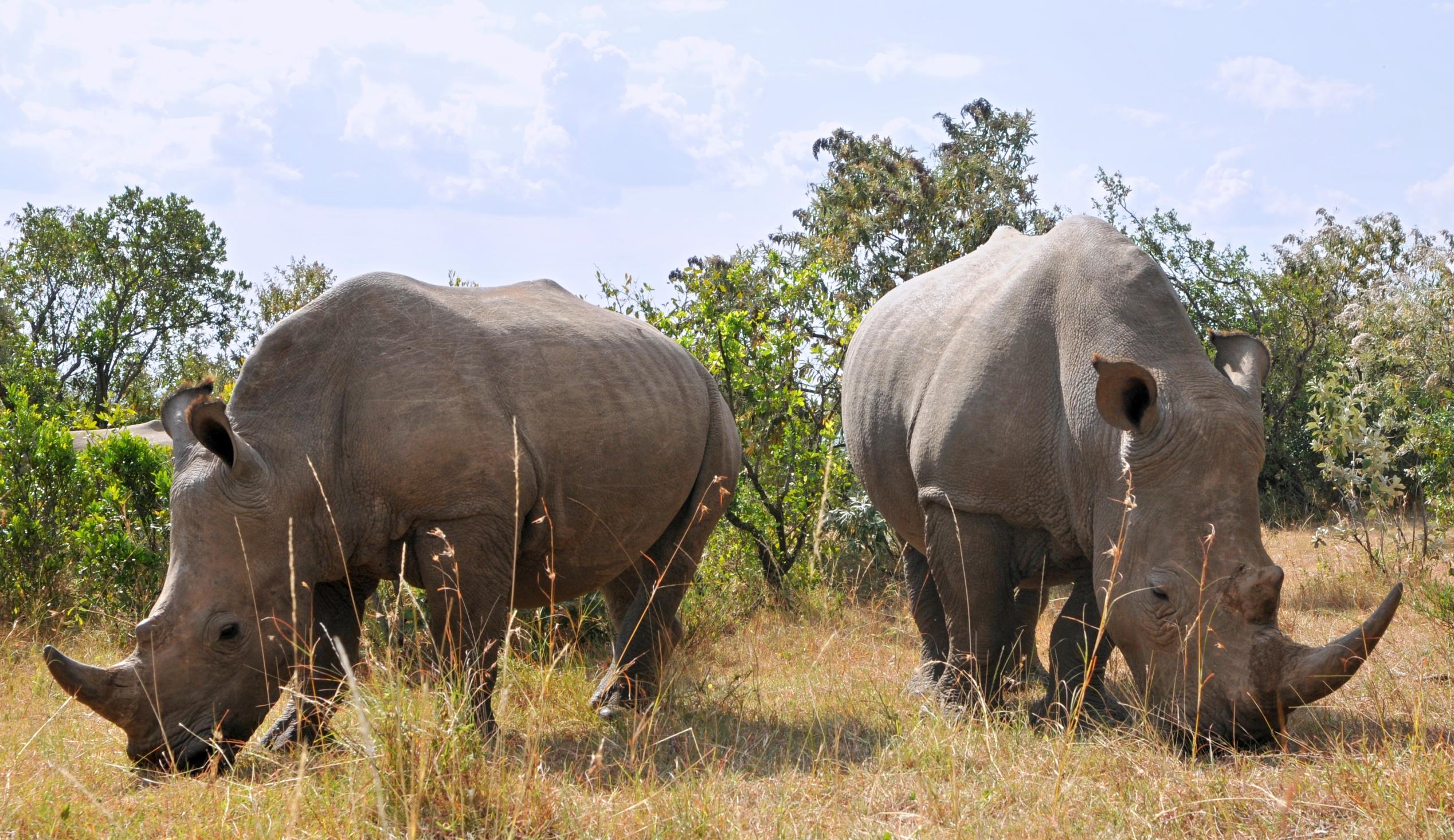 Pytliaci v JAR to majú zrátané. Zabitie nosorožca sa posudzuje ako vražda