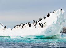 antarktída, tučniaky, ľadovec, sneh, ľad
