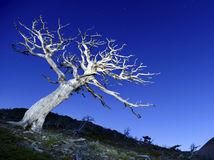 Montana, národný park, strom