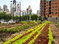 Pestovateľské mestá, film