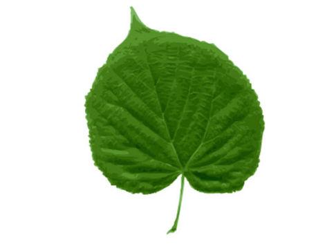 Poznáte listy a stromy, z ktorých padajú?