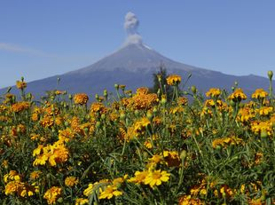 Popocatepetl, kvety