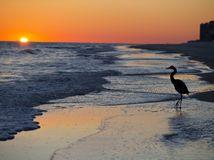 pláž, západ slnka, Alabama, vták, volavka