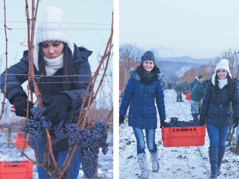 Zázrak prírody: dve ľadové vína