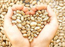 srdce, strukoviny, fazuľa