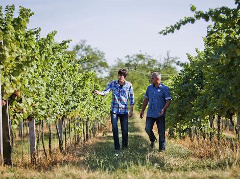 Žitavské vinice sú vo svetovej tridsiatke