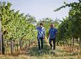 Tomáš Strelinger, vinohradníci, vinohrad, vinica