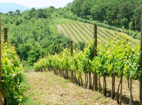 Srbské víno sa vracia ako pripomienka rímskych cisárov