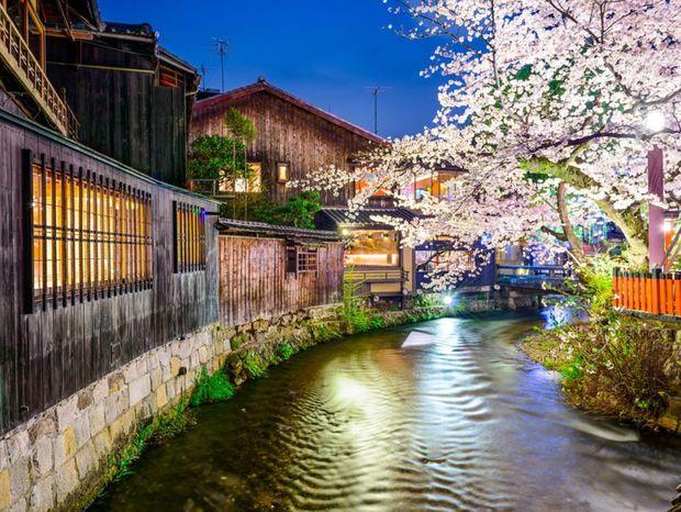 Kjóto, Japonsko, mesto, rieka, čerešne, sakura, strom, kvitne, kvety, romantika, večer