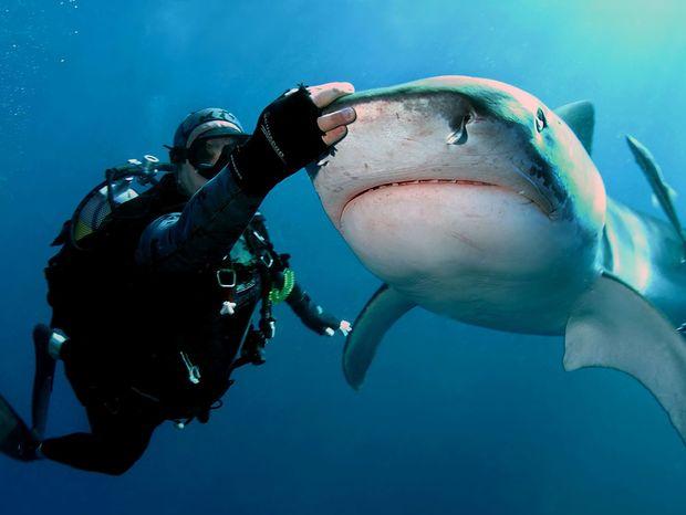 žralokár, Richard Jaroněk, žraloky, more, ryby, čeľuste, potápač, potápanie,