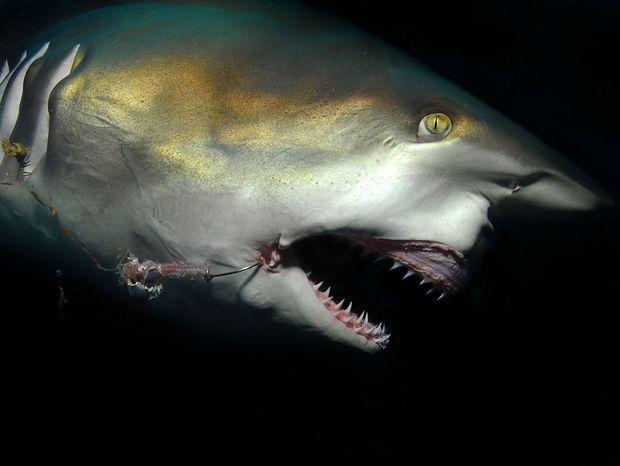 Životnosť oceánov je zhruba 100 rokov, príčinou je znečisťovanie a masový výlov.