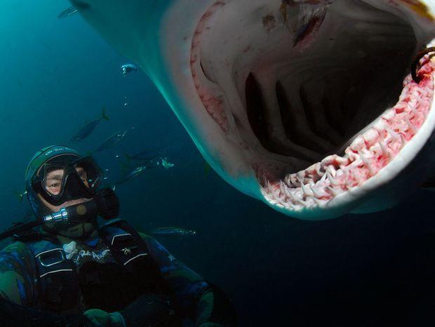 Ak by ste čisto hypoteticky žraloka stretli, nikdy sa k nemu neotáčajte chrbtom a neplávajte preč.