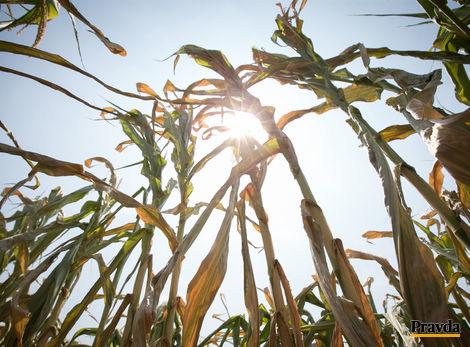 Zničujúce sucho. Slovensko musí investovať do závlah i výskumu