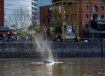 veľryba, Argentína