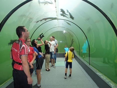 Sklenený tunel pod rybníkom. Na Morave!