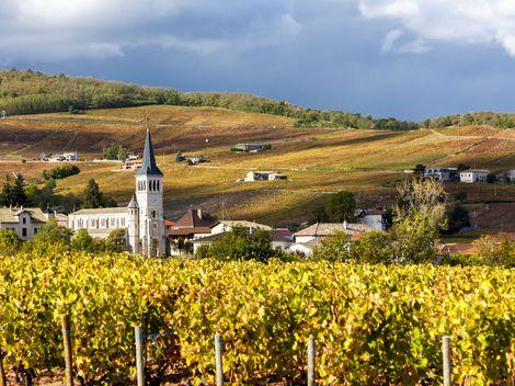 Klimatické zmeny trápia francúzsky vinič