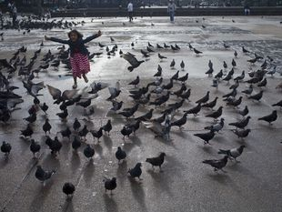 Guatemala, holuby, dievčatko, naháňačka, námestie