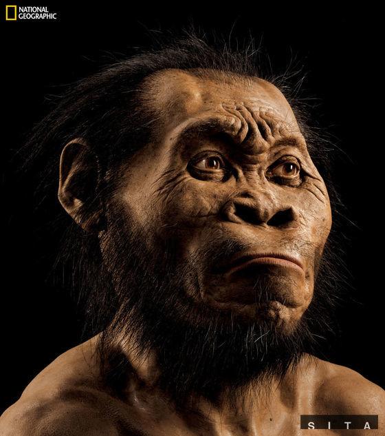 Rekonštrukcia tváre predchodcu človeka Homo naledi. Autorom rekonštrukcie je paleontológ John Gurche.