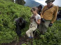 Gorily, Rwanda, národný park, prales