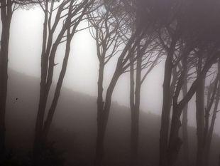 Južná Afrika, JAR, stromy, hmla, les, pahýle, ponurý, tajomno,tma, prítmie, hora, strach, úzkosť,