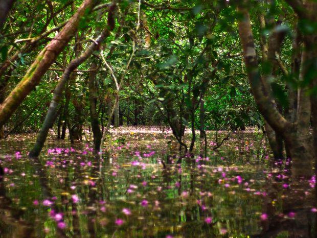 Plávajúce kvety zo stromov na hladine zaplavenej džungle.