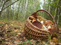 huby, les, jeseň