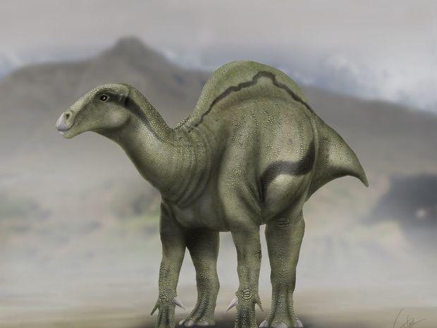 dinosaurus, Morelladon Beltran, nález, vykopávka