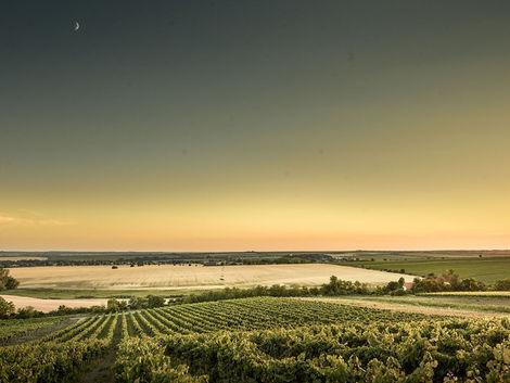 Víno z Rúbane našlo svoje chateau