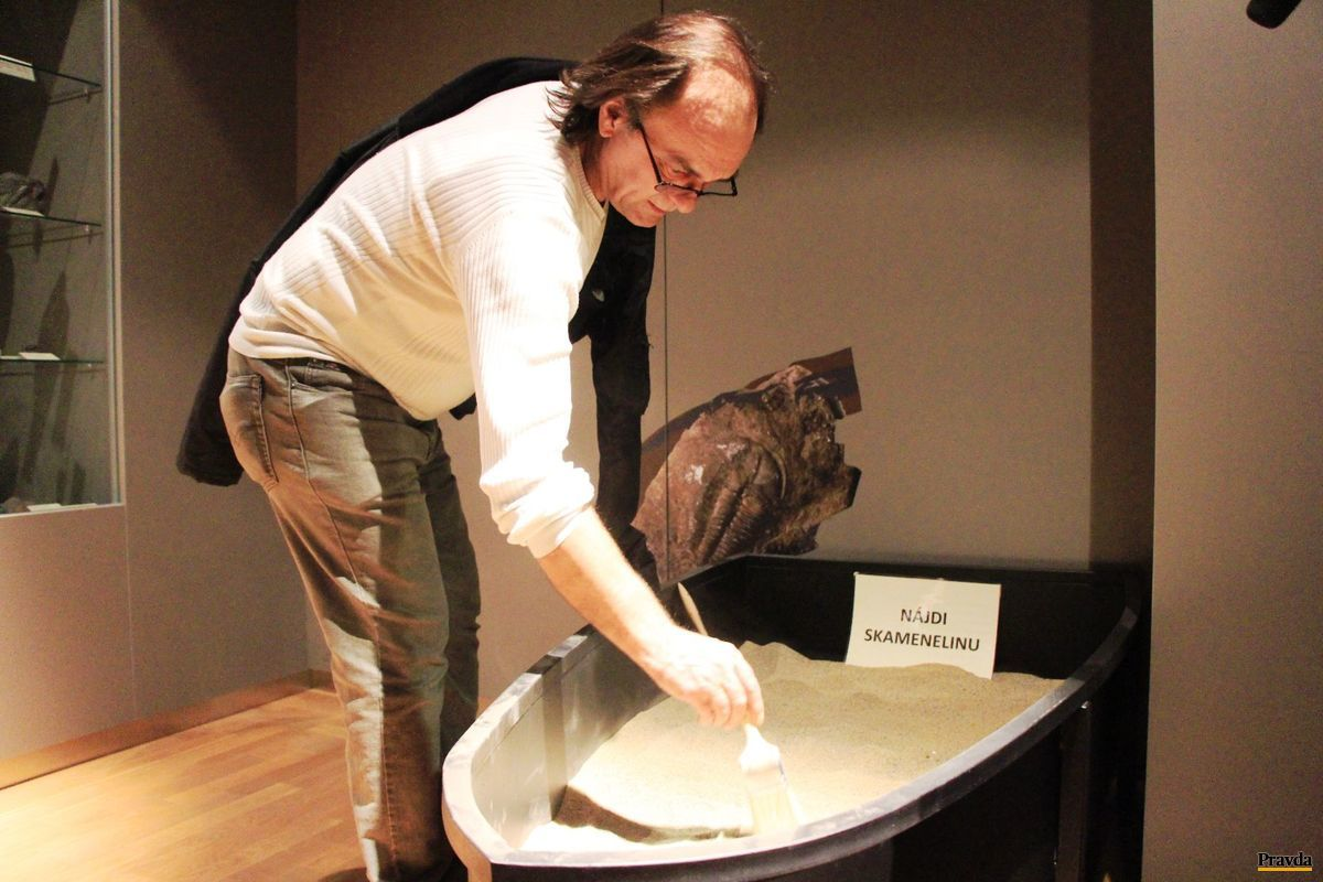 V múzeu sa môžete pokúsiť nájsť skamenelinu.