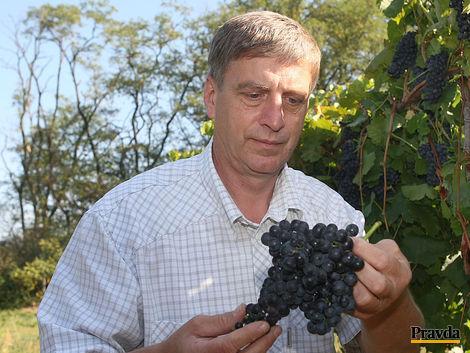Víno, čo sa rodí v rodnom kraji